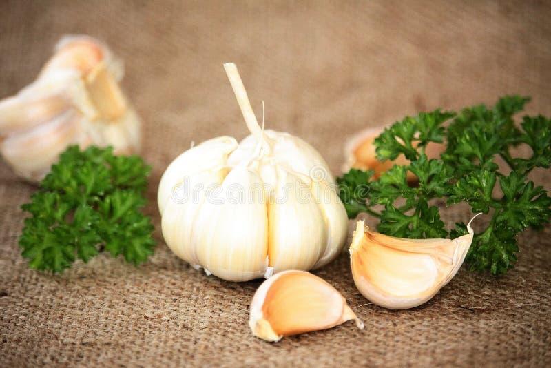 大蒜用荷兰芹 免版税图库摄影