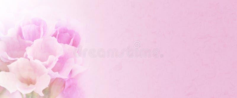 大蒜藤开花(Mansoa alliacea) 在软性和迷离样式的甜颜色花与文本的空间 免版税库存照片