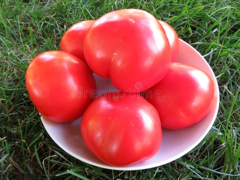 大蕃茄为切准备 免版税图库摄影