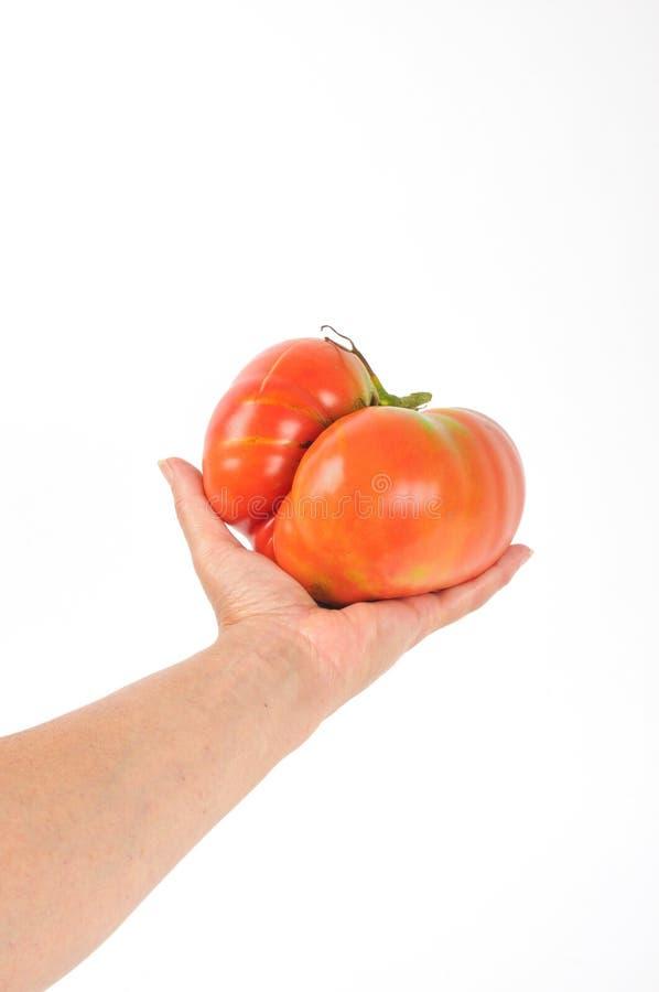 大蕃茄 库存图片