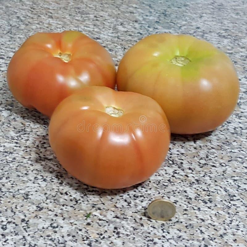 大蕃茄 免版税库存照片