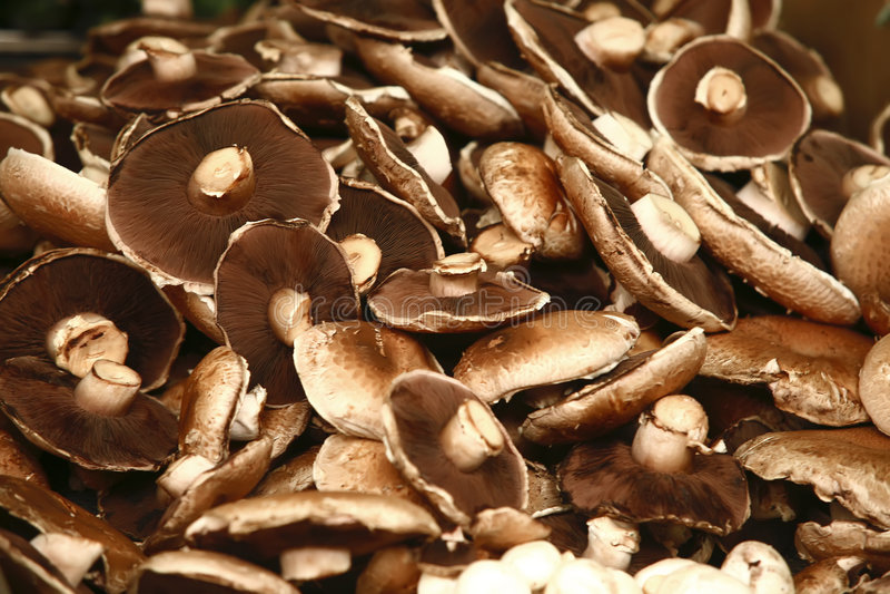 大蘑菇白色 库存照片