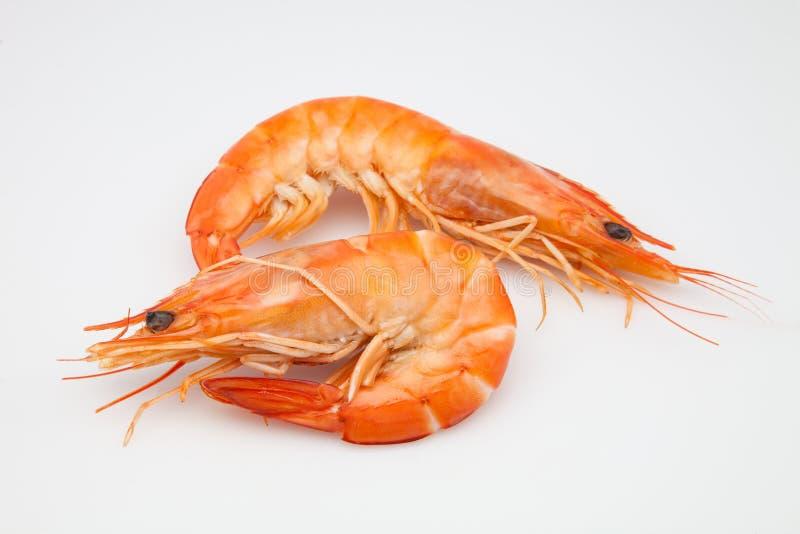 大虾二 免版税库存图片