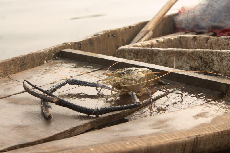 大虾 免版税库存照片