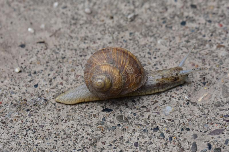 大蜗牛关闭 库存图片