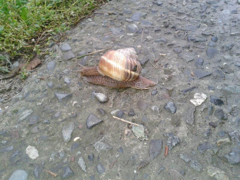 大蜗牛2 库存照片