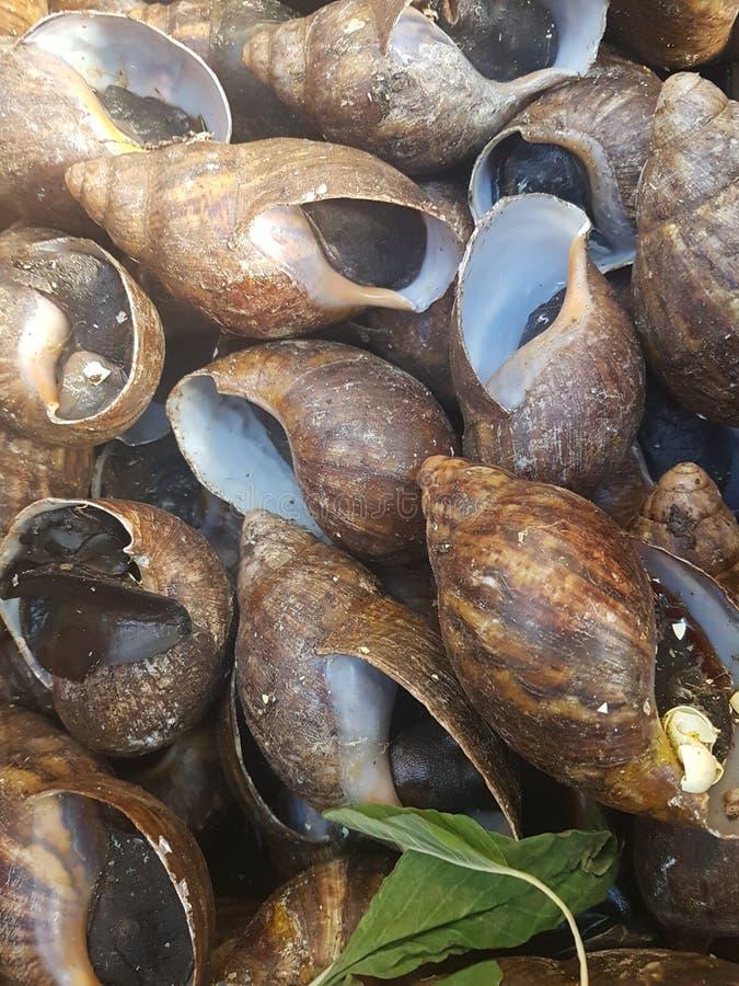 大蜗牛 库存照片