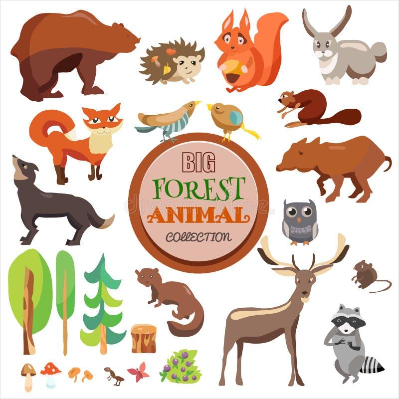 大被设置的森林滑稽的动物 传染媒介汇集,在白色背景、Fox、灰鼠、熊,狼和其他, 库存例证