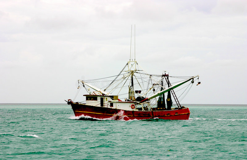 大西洋小船虾 免版税库存照片