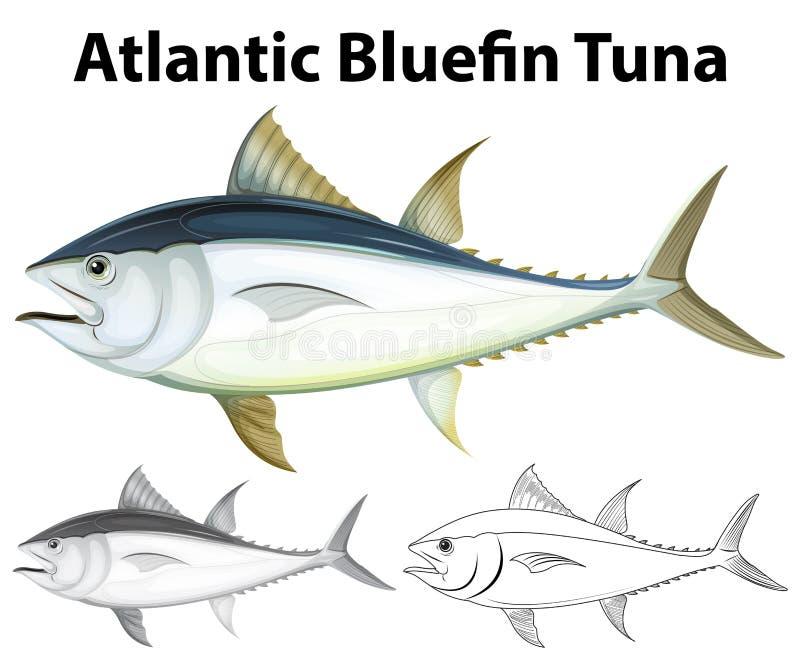 大西洋金枪鱼的起草的字符 皇族释放例证
