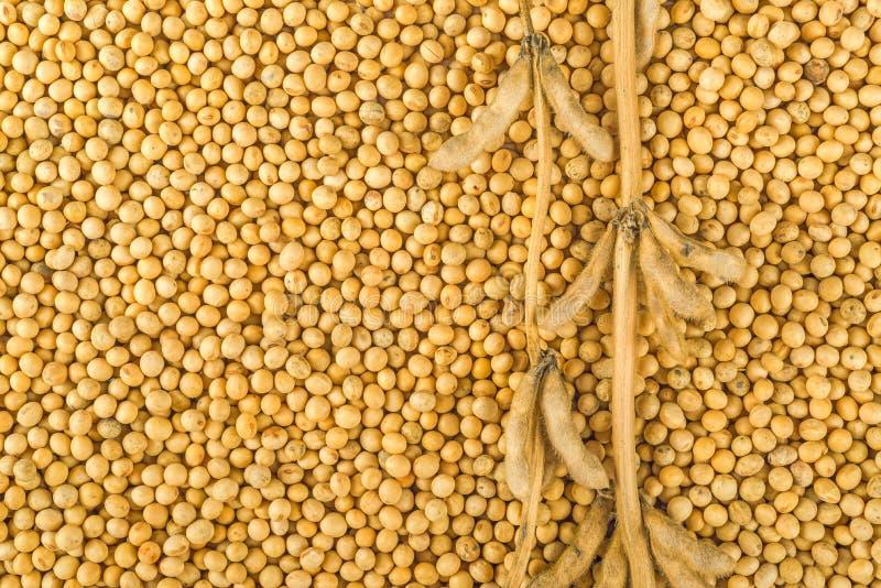 大豆植物、荚和豆 库存照片