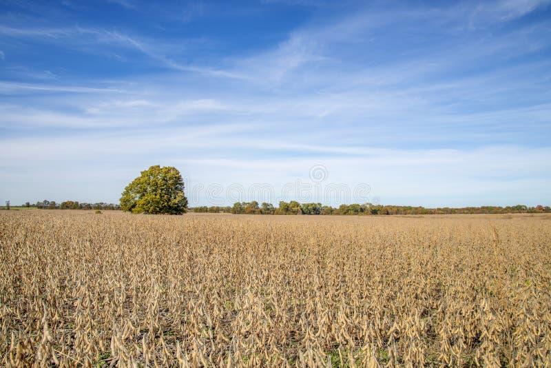 大豆的密苏里农田 免版税库存图片