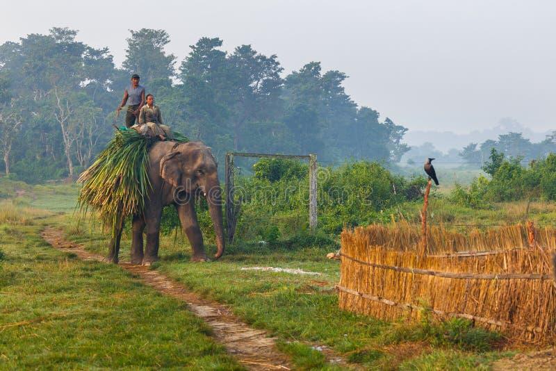 大象和人们在工作在日出 库存图片