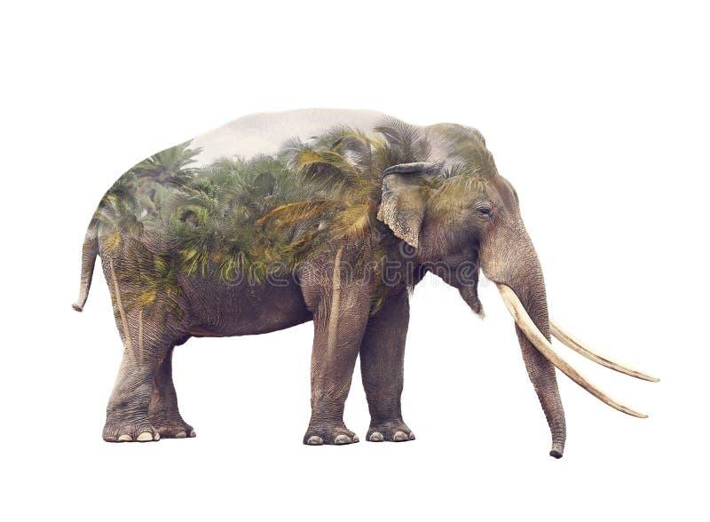 大象和棕榈树两次曝光  免版税库存图片
