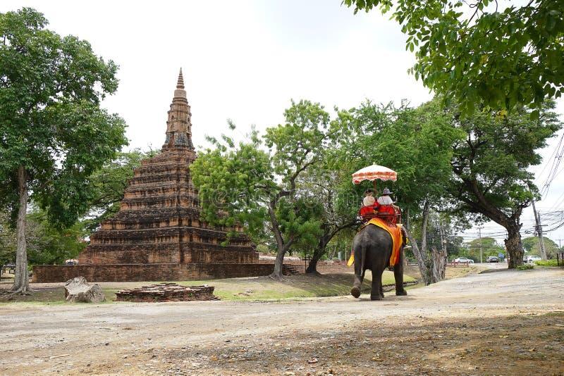 大象和游人 库存图片