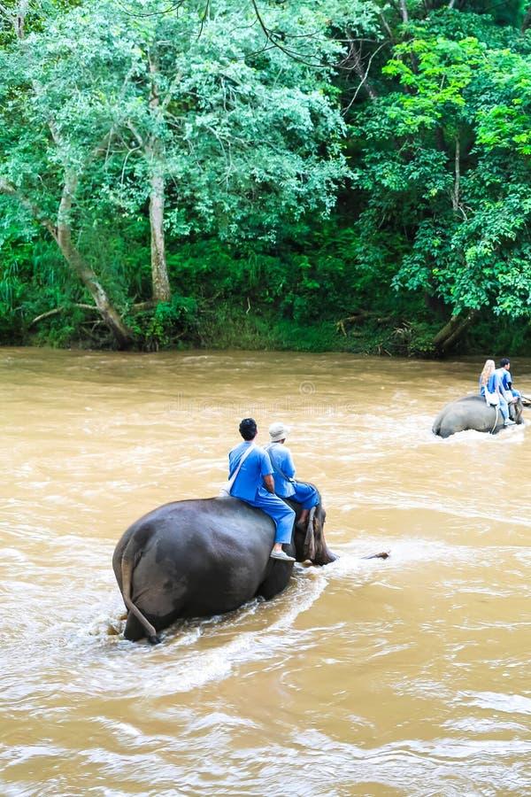 大象在密林在北泰国 库存图片