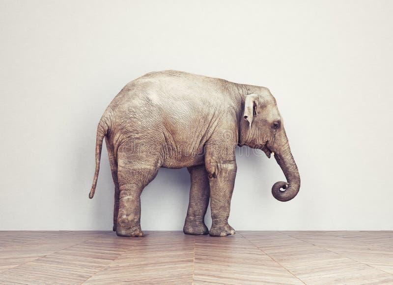 大象安静在屋子里 免版税库存图片