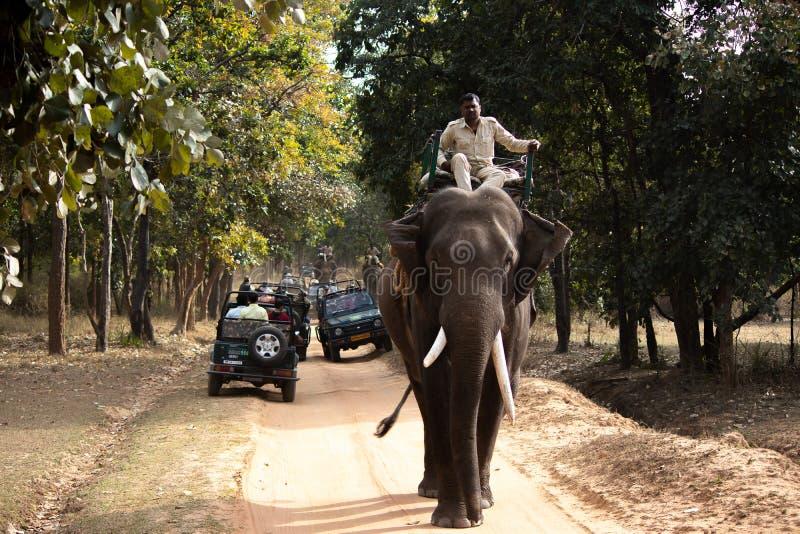大象徒步旅行队在国立公园 免版税库存照片