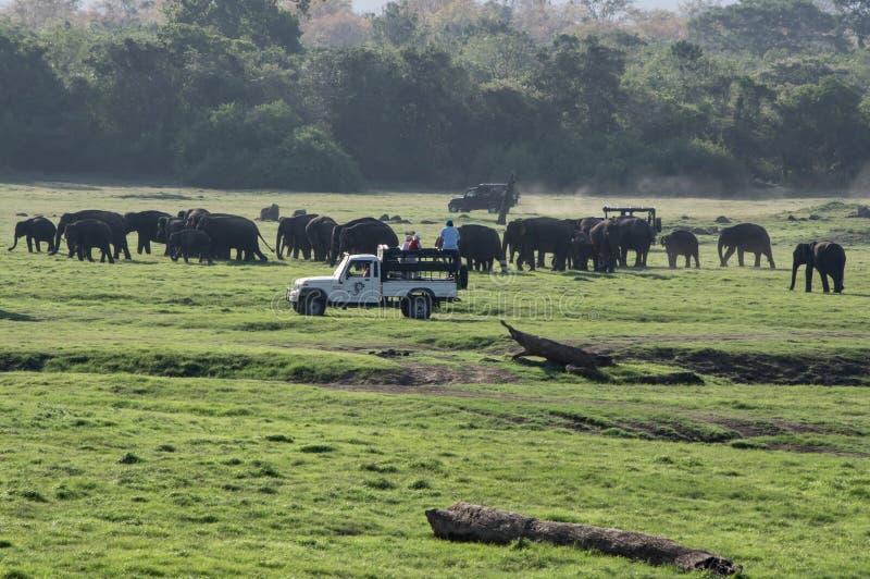 大象徒步旅行队在斯里兰卡 免版税图库摄影