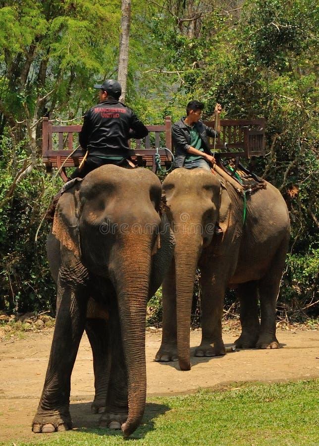大象村庄是圣所在琅勃拉邦附近 免版税库存图片