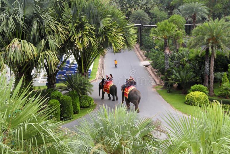 大象步行在Nong Nooch热带庭院里在芭达亚在泰国 库存照片
