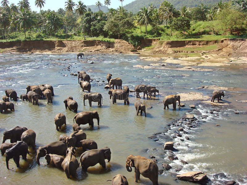 大象洗涤 免版税库存照片