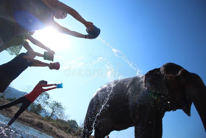 大象浴的完美的日子 库存照片
