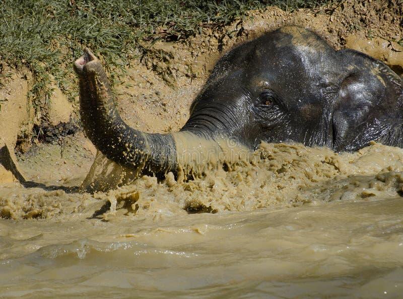 大象游泳 库存照片