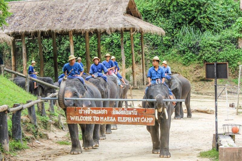 大象游行,清迈,泰国 免版税图库摄影