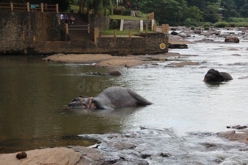 大象牧群来了到饮水池 大象牧群来了到饮水池 免版税库存照片