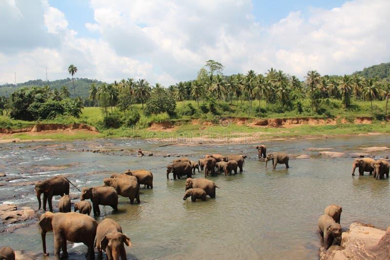 大象牧群来了到饮水池 大象牧群来了到饮水池 库存照片