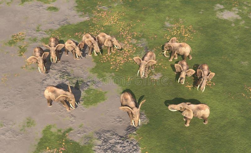 大象牧群的鸟瞰图 皇族释放例证