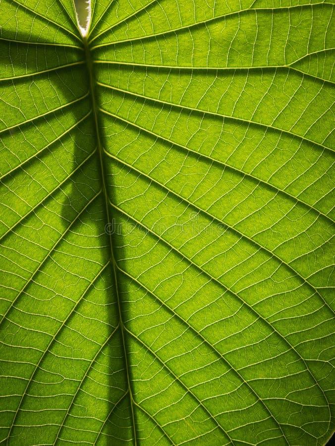 大象登山人叶子的样式和阴影 免版税库存图片