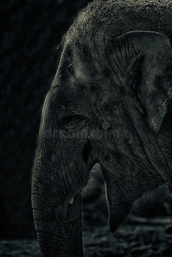 大象的低调细节 免版税图库摄影