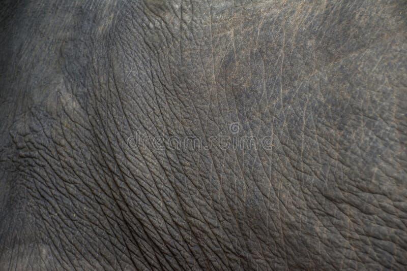 大象皮肤纹理摘要背景 选择聚焦 库存照片