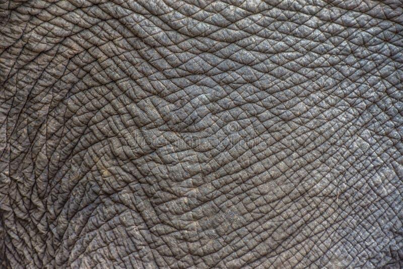 大象皮肤纹理摘要背景 选择聚焦 免版税库存照片