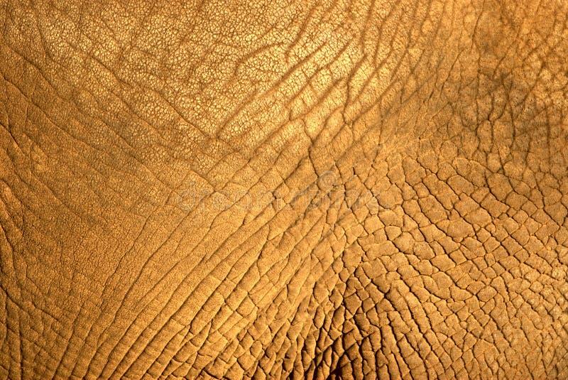 大象皮肤纹理 免版税库存照片