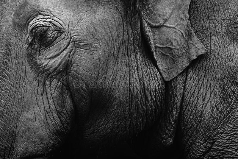大象皮肤纹理 库存图片