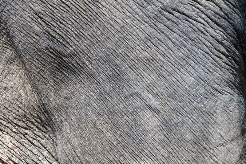 大象皮肤 库存图片