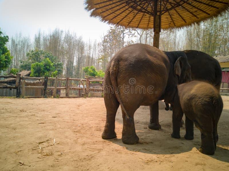 大象看起来见面 免版税库存图片