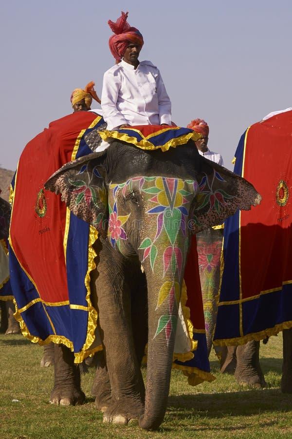 大象节日在斋浦尔,印度 免版税图库摄影