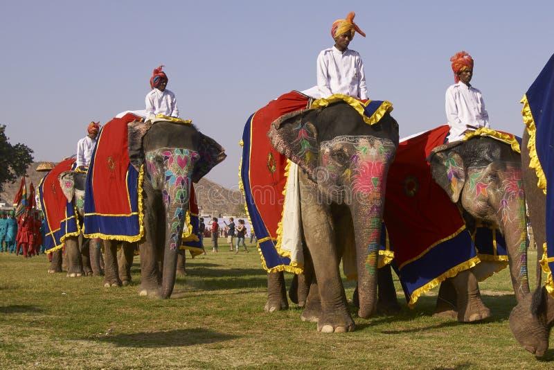 大象节日在斋浦尔,印度 库存图片