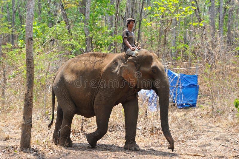 大象训练,圣所 库存照片