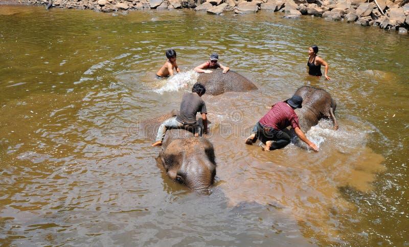 大象训练,圣所 库存图片