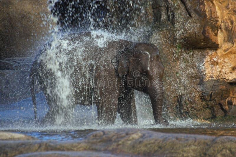 大象阵雨 库存图片