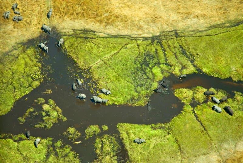 大象鸟瞰图在奥卡万戈三角洲的在博茨瓦纳 免版税库存图片