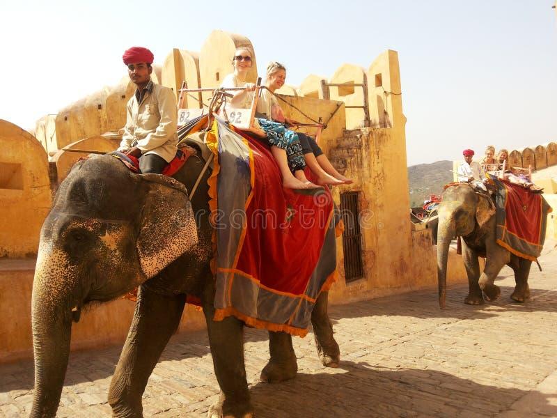 大象,阿梅尔,斋浦尔皇家乘驾  库存图片