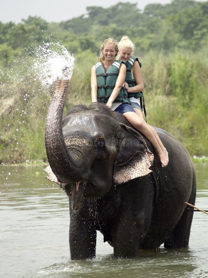 洗大象浴的游人 库存照片