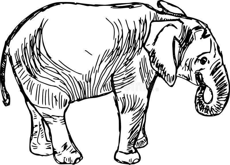 大象 库存例证