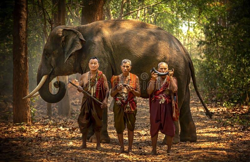 大象mahout画象 泰国的Kuy久井人民 狂放大象捉住大象的仪式做或 mahout和 免版税库存照片